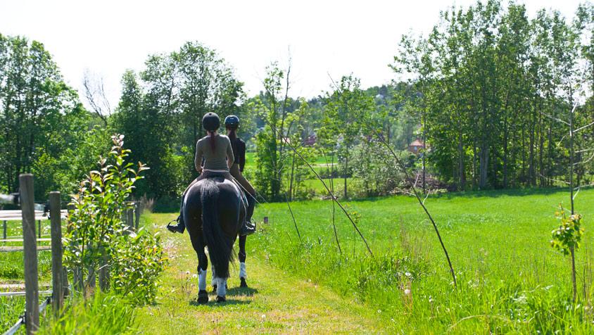 Inn paa tunet ridning hester